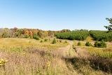 155± Acres of Barron County Wooded Hunting/Rec Land