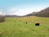 ABSOLUTE: 415± Acres Offered in 4 Tracts