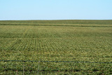 2/18 320± ACRES • CUSTER COUNTY, OK.