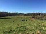 230+/- Acre ABSOLUTE Court Ordered Estate