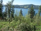 Absolute Auction of Apx. 12 Acres overlooking Beautiful Lake Coeur d'Alene, Idaho