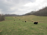 415 Acres in Smyth County Offered in 4 Tracts