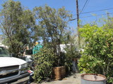 Levi Goldstein: Trees and Plants, General Goods