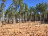 PROPERTY #2 - 217± TOTAL ACRES - WEBSTER COUNTY, GEORGIA