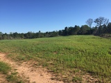PROPERTY #3 - 103± TOTAL ACRES - MARION COUNTY, GEORGIA
