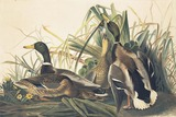 Online-Only Wildlife Art Auction