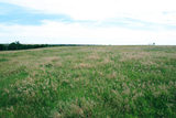 153 Acres With Cattle Pens and Facilities Near Custer City, OK