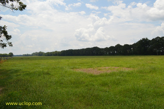 232+/- acres on Bayou Teche located only 5 minutes from Evangeline Downs in St. Landry Parish