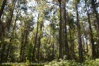 Pearl River County Timberland For Sale at Auction in Poplarville, MS