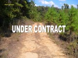 Hardeman County TN - 22.74 acres Woods with Open Areas
