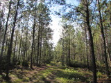 Lowndes County Land Auction