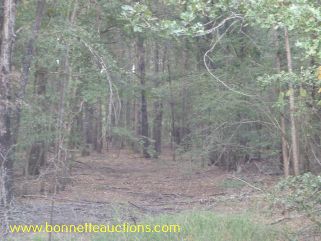 Louisiana Hunting Land For Sale At Auction In Bastrop La