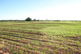 100 Acres Southeast of Hydro, OK