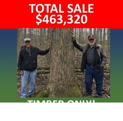 ONLINE ONLY ABSOLUTE AUCTION - Timber