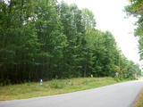 LOW RESERVE: 3.5 Wooded Acres