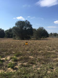 26.38± Total Acres Offered In 3 Homesites Astatula