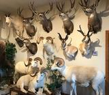 TAXIDERMY AUCTION