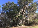 ABSOLUTE AUCTION - TWO FLORIDA HOME SITES - WATERFRONT COMMUNITIES
