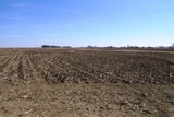 Top Producing Central Saunders County Non-Irrigated Farmland Absolute Auction