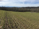49 Acres (+/-) in 14 Tracts