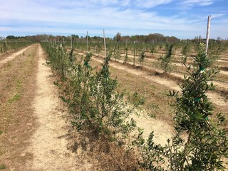 Olive Farm online auction May 4-18th: