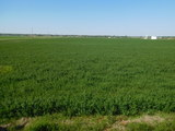 800 Acres Near Lindsay, OK