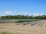 123 +/- Acre Preserved Farm in Pilesgrove Township