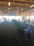 NIAGARA COUNTY 4-H LIVESTOCK AUCTION