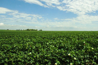 160 Acres - Home & Improvements North of Hydro, OK