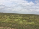 160 acres North of Laverne, OK