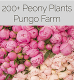 150+ Dormant Peony Plants- Bloom in Spring!