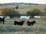 11/13 CATTLE FARM * HUNTING * 211 ± ACRES