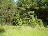 Lot 12 in North Fork Subdivision