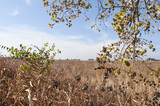 20± Acre Tract- Building Sites –ENID OK