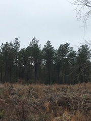 Deer & Turkey Hunting Property For Sale in Sikes, LA