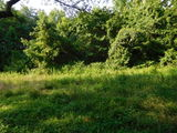 Land in Pilesgrove Township