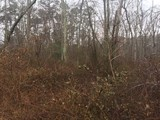 13.43 +/- Acre Wooded Building Lot in Franklin Township