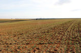 160 Acres Farmland South of Putnam, OK