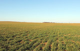 490 Acres Farmland & Grassland