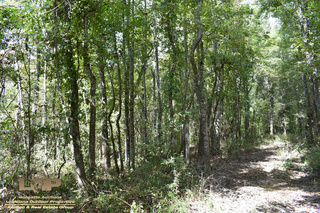 Concordia Parish Duck & Deer Hunting Land For Sale