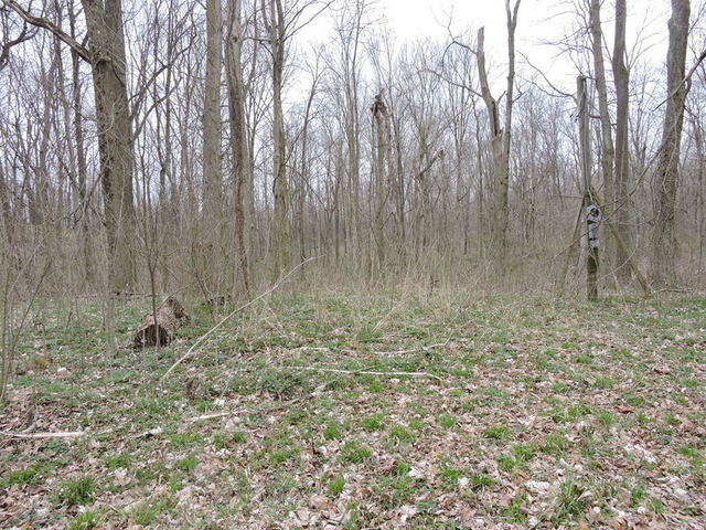 Real Estate Auction - 11.79 Acres of Woods