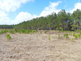 N.E. Ware County Land Auction