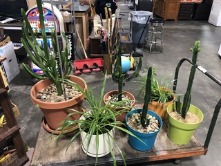 Plants and Cactus
