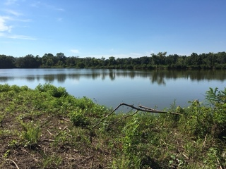 54.66 Acres in Posey County