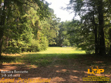 Land For Sale in Pollock, LA