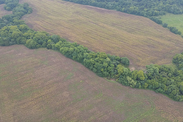 (LONGTON) ABSOLUTE - 87.80+/- Acres Farm Land w/ Building, Home, Creek and Pond