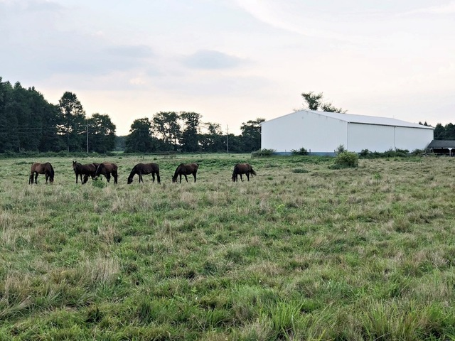 3 Farms - From 28 to 44 Acres