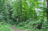 LAND AUCTION! 4398 Acres in McDowell County WV