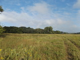 10/11 39.27 ± ACRES * GRASSLAND * TIMBER  * POND * HUNTING * NASH OK.