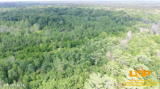 Court Ordered Absolute Land Auction in Grant Parish, LA